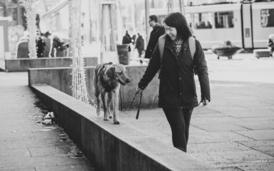 Urban Hundefitness – Trening i bymiljø